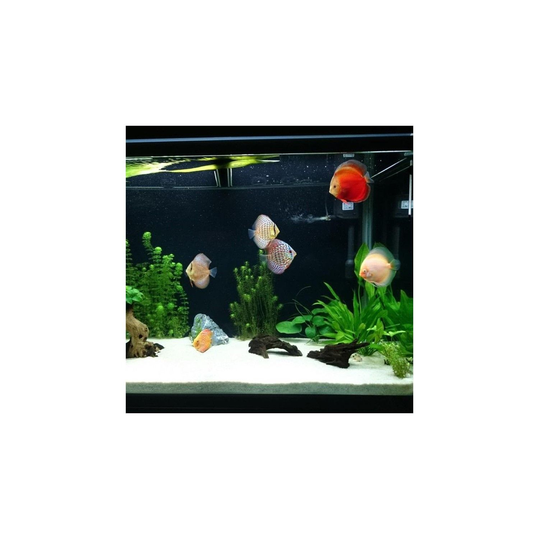 Arena de silice 10kg decorativa para acuarios plantados y for Peces ornamentales acuarios