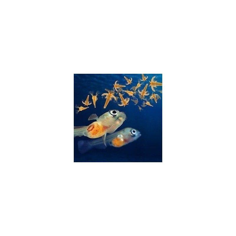 Artemia Salina Artemia Para Peces X200gramos 90% Eclosion